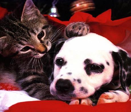 Nej 1 Zvířátka - Fotoalbum - Psi a kočky - Psi a kočky: www.nej1zviratka.estranky.cz/fotoalbum/psi-a-kocky/psi-a-kocky.html